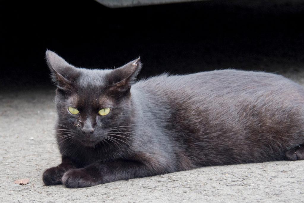 唐沢山神社 黒猫